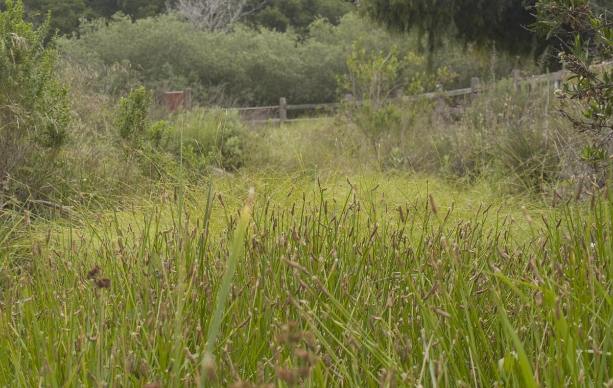 Bioswell construction, Atascadero Creek, Creeks division, City of Santa Barbara Parks & Recreation.