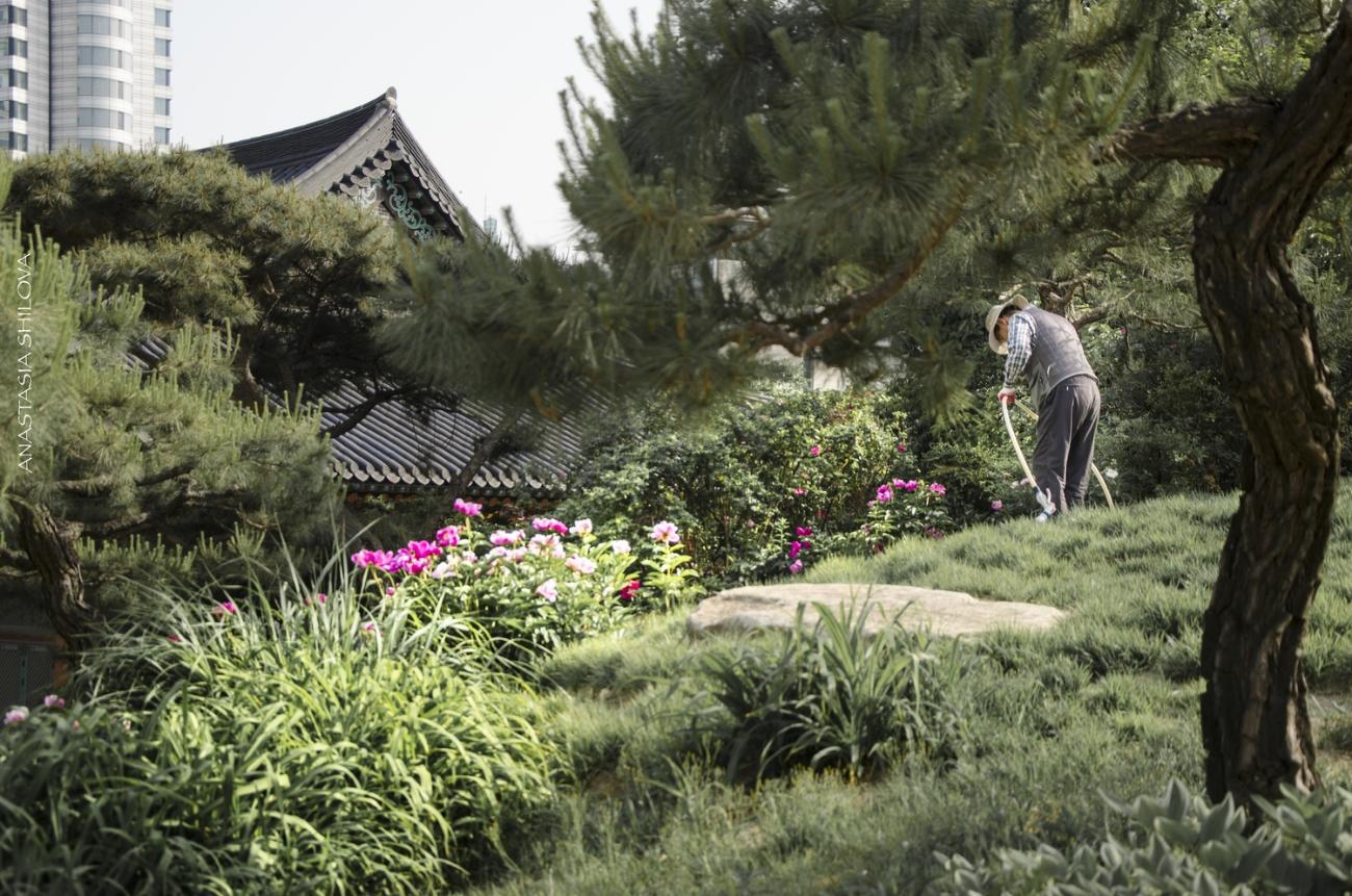 Lawn Maintenance Around Temple