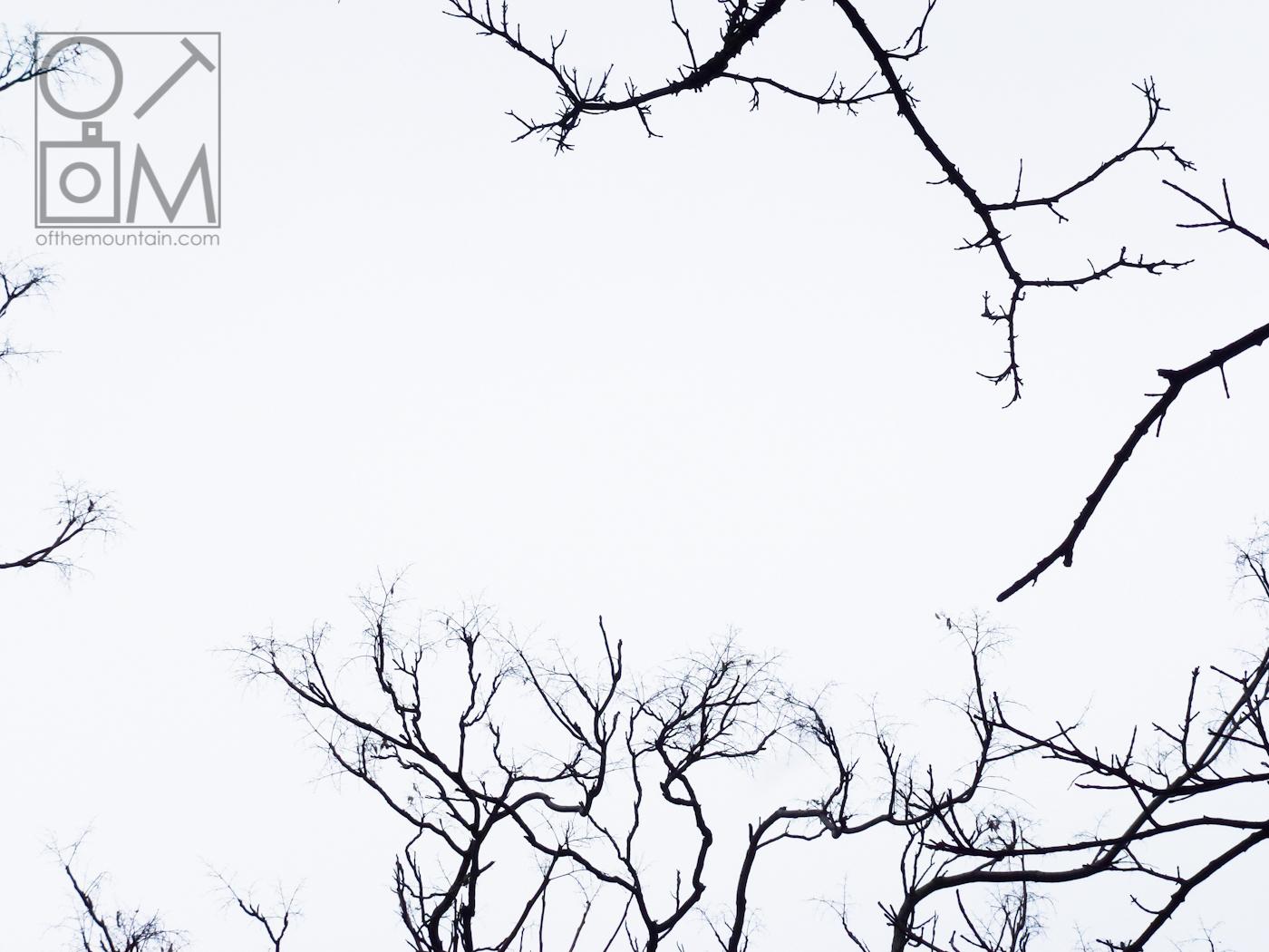 Boston - Downtown - Branches