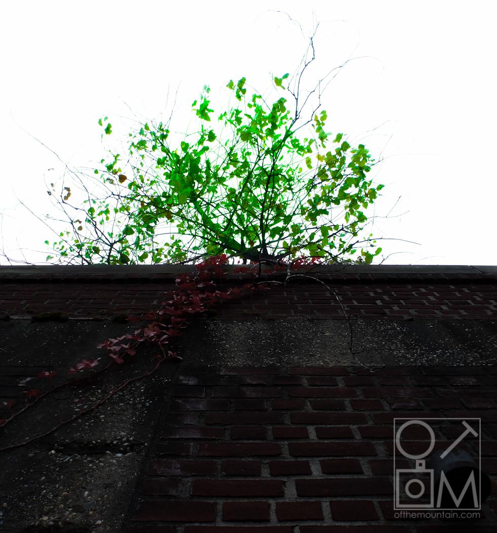 Philly - Spring Garden - Tree