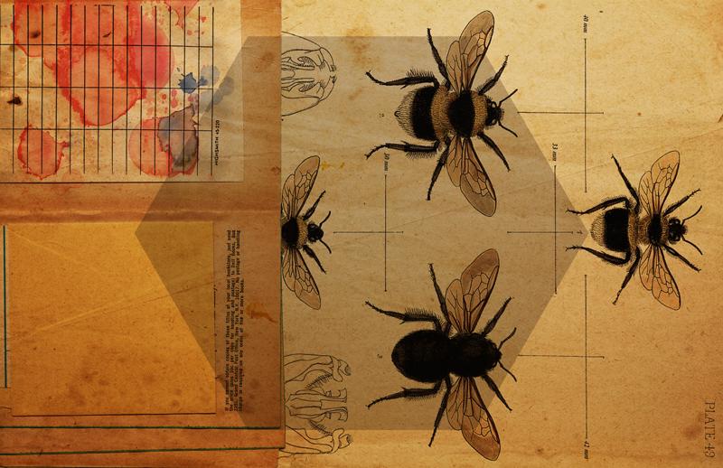 Apidae by Destro (800px).jpg