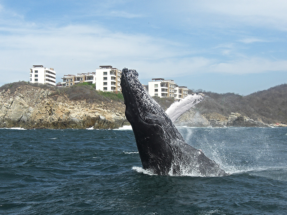 Huatulco Bay Tours