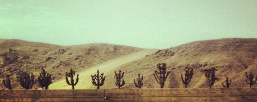 busk and bask desert backdrop.jpg