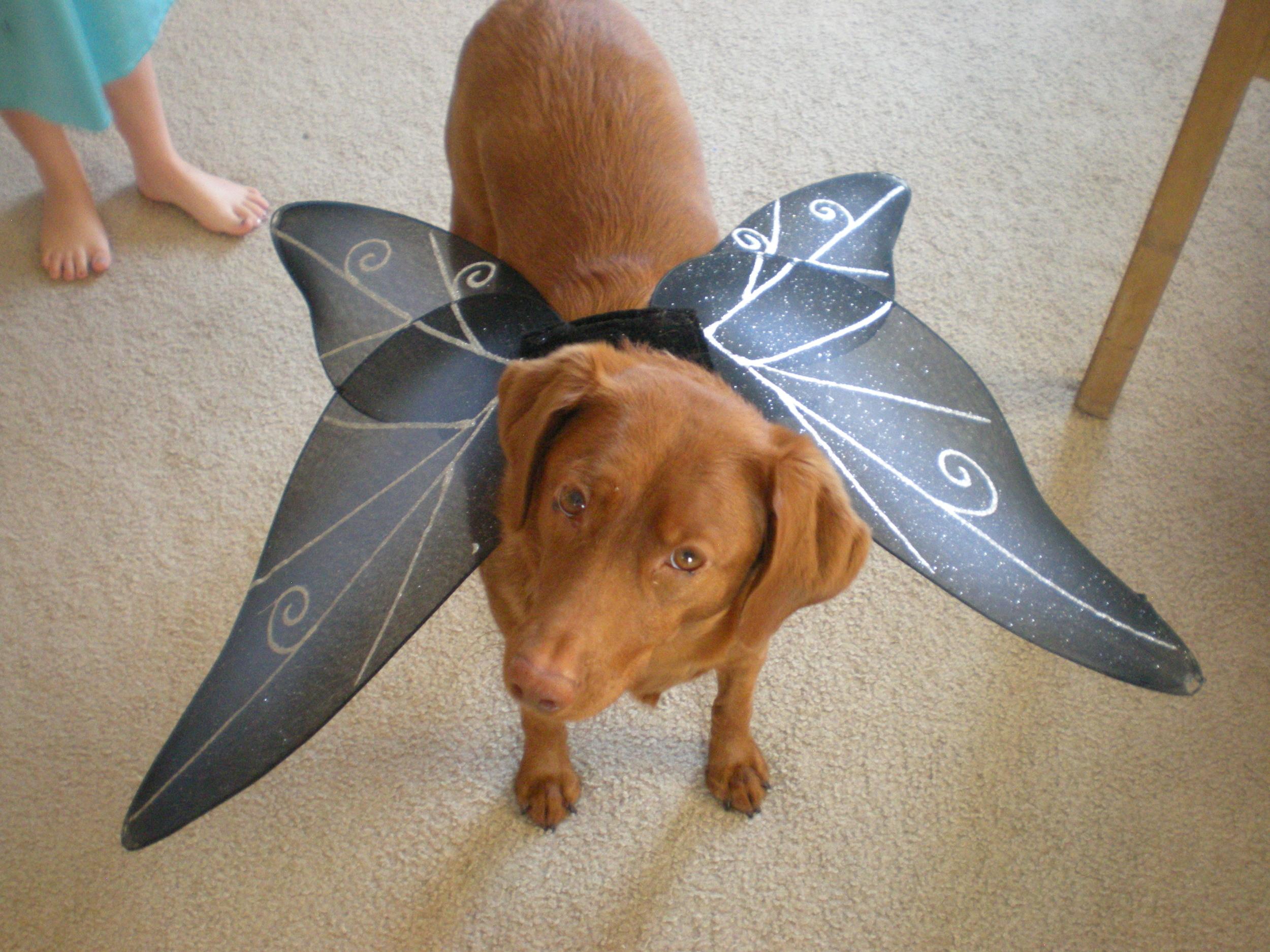 Cinnamon dog, the fairy