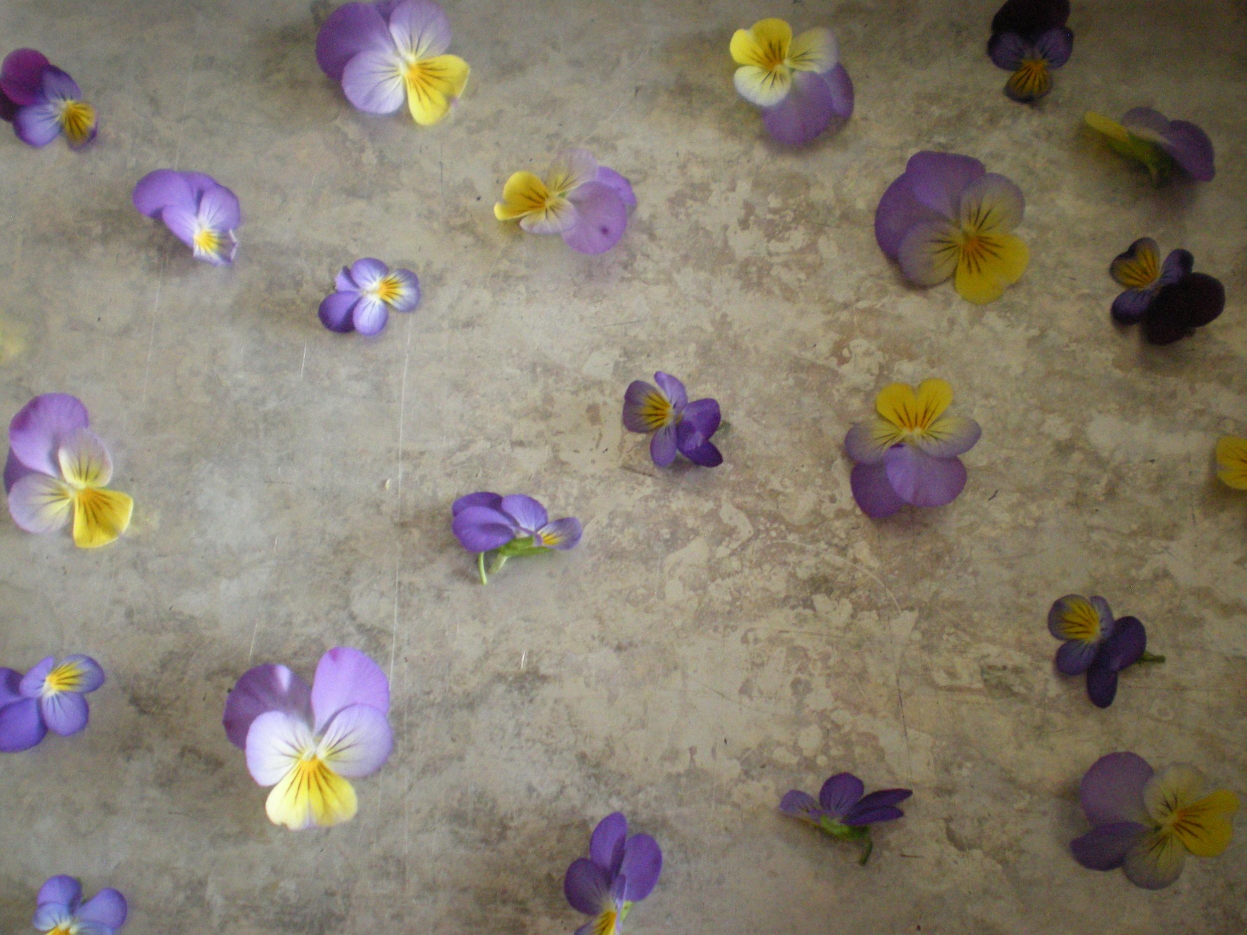 Making herbal jello with violas