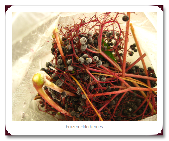 Herb of the month: Elderberry by The Hippy Gardener