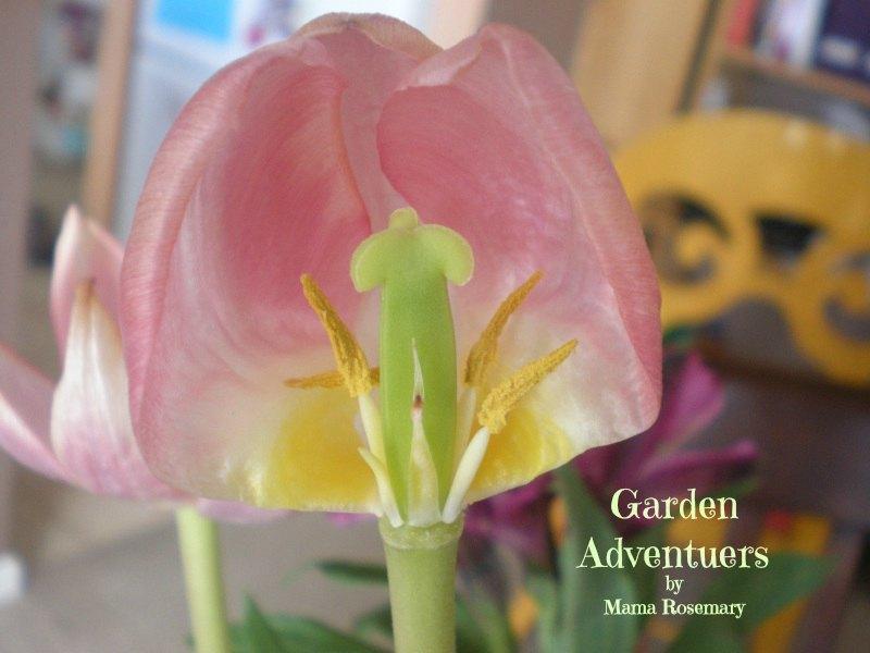 gardenadventures.jpg