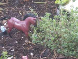 Remy chowing down on thyme...