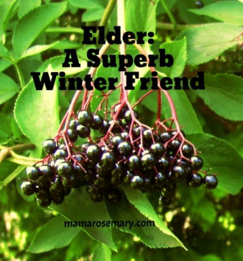 EldersuperbwinterfriendWM.png