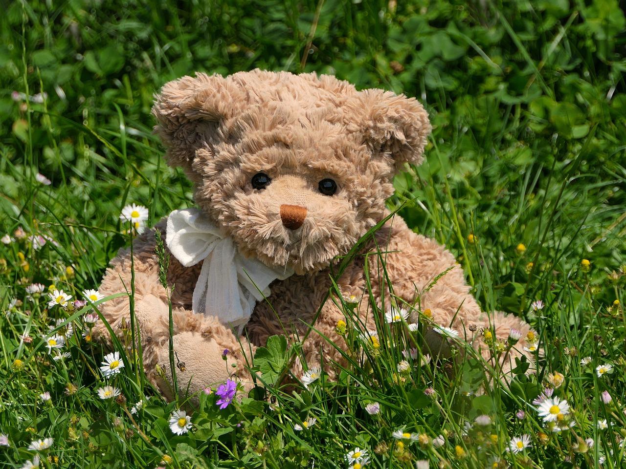 teddy-3394723_1280.jpg
