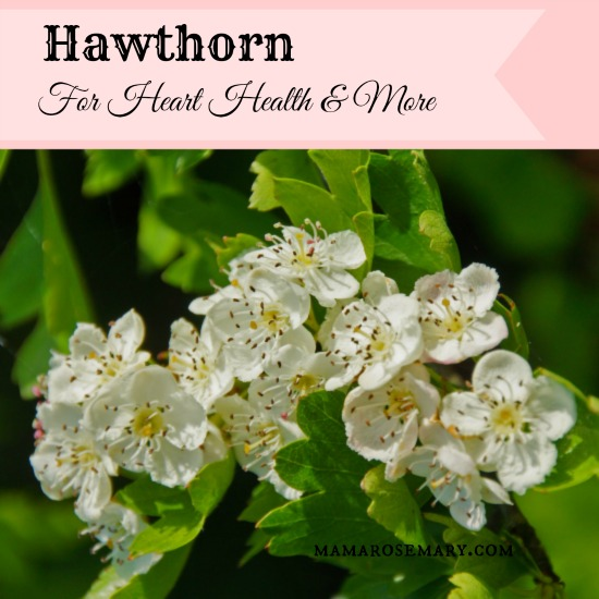 HawthornForHeartHeatlhMonographWM.jpg