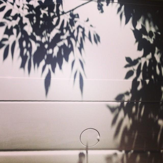 Tropical van shadows in Brooklyn