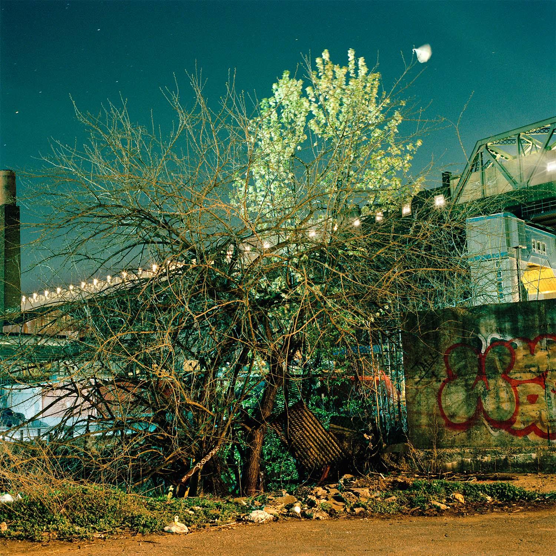 Spring Tangle by Miska Draskoczy,  courtesy of Tepper Takayama Fine Arts
