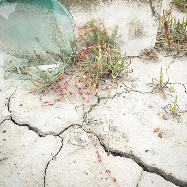 "Walking Libraries 01 | Coastal California' (2016), c-print: 20"" x 20""; site-specific documentation with fiber drawing, vintage glass, recycled packaging, soil, and local vegetation 