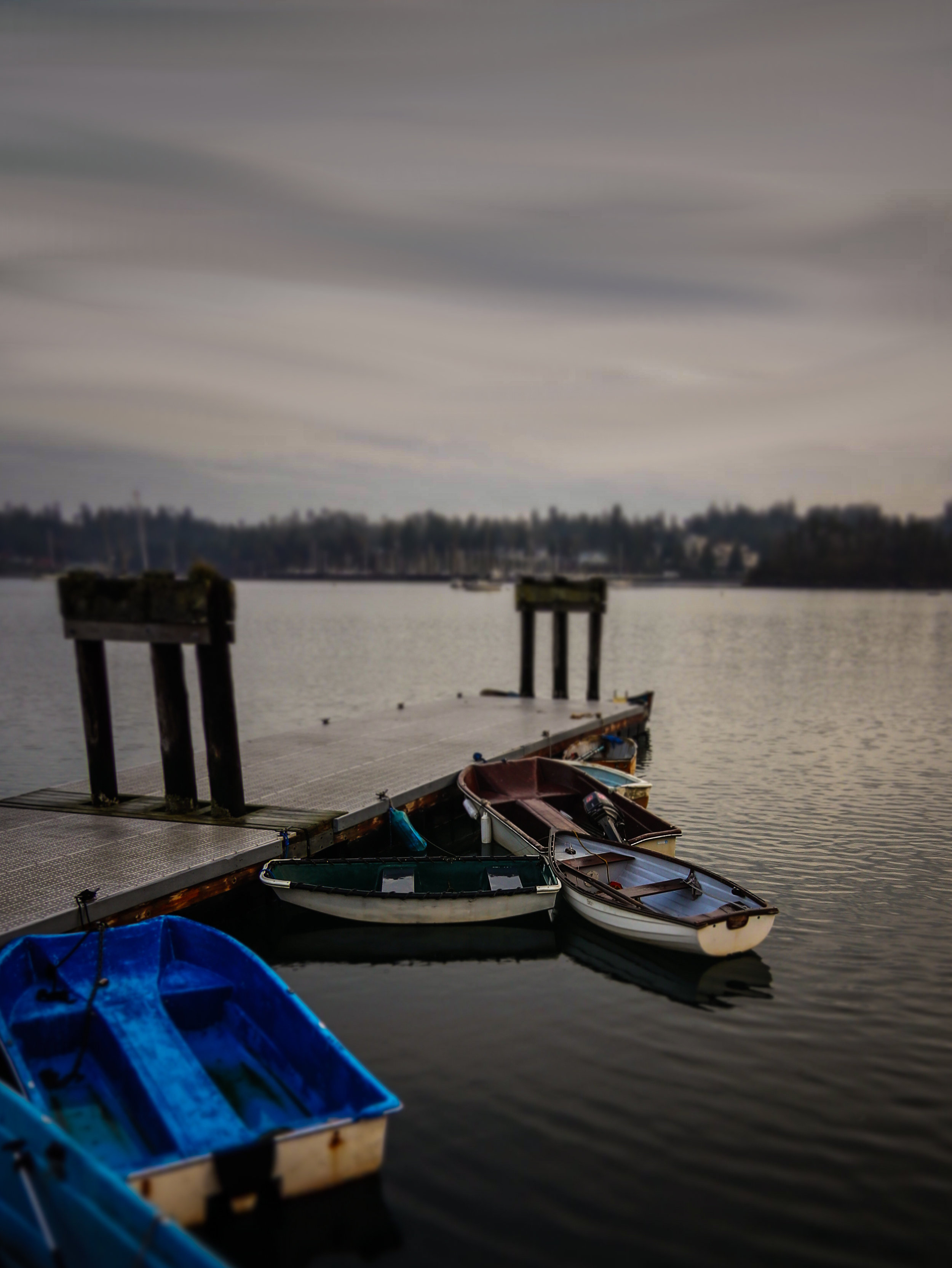 From yesterday afternoon (11/14/2018); Port Hadlock, WA