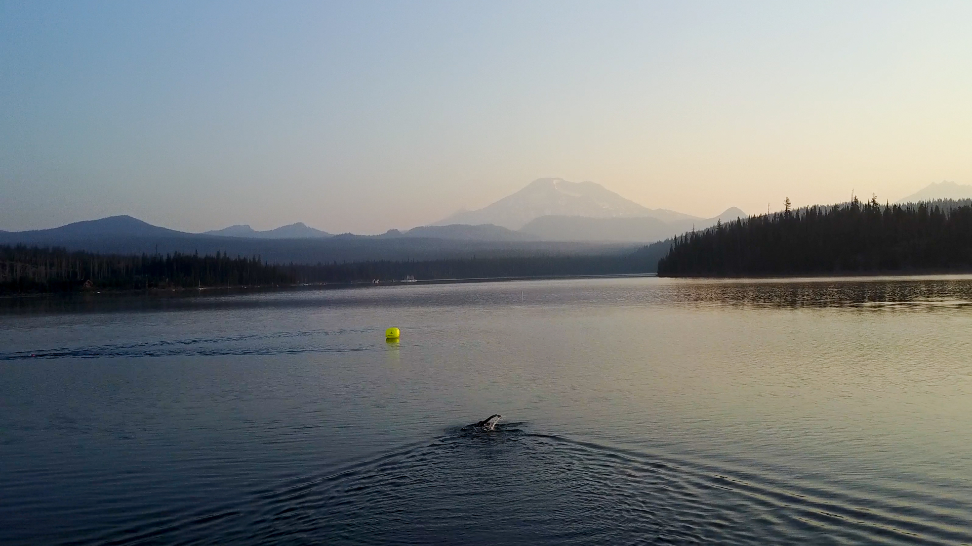 Elk Swim TL-5.jpg