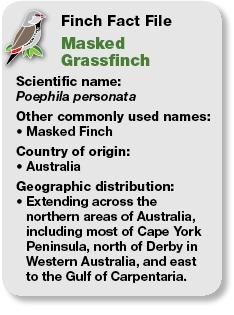 04_Fact_File_Masked_Grassfinch.jpg