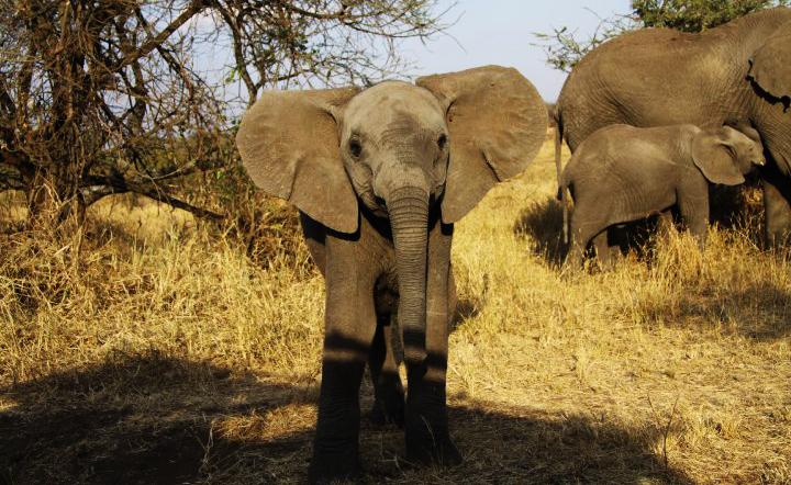 Animal: na e momentonan aki tin mas of menos 1000 animal riba lista di extinshon, incluyendo olifanti, lora, gorila y tiger