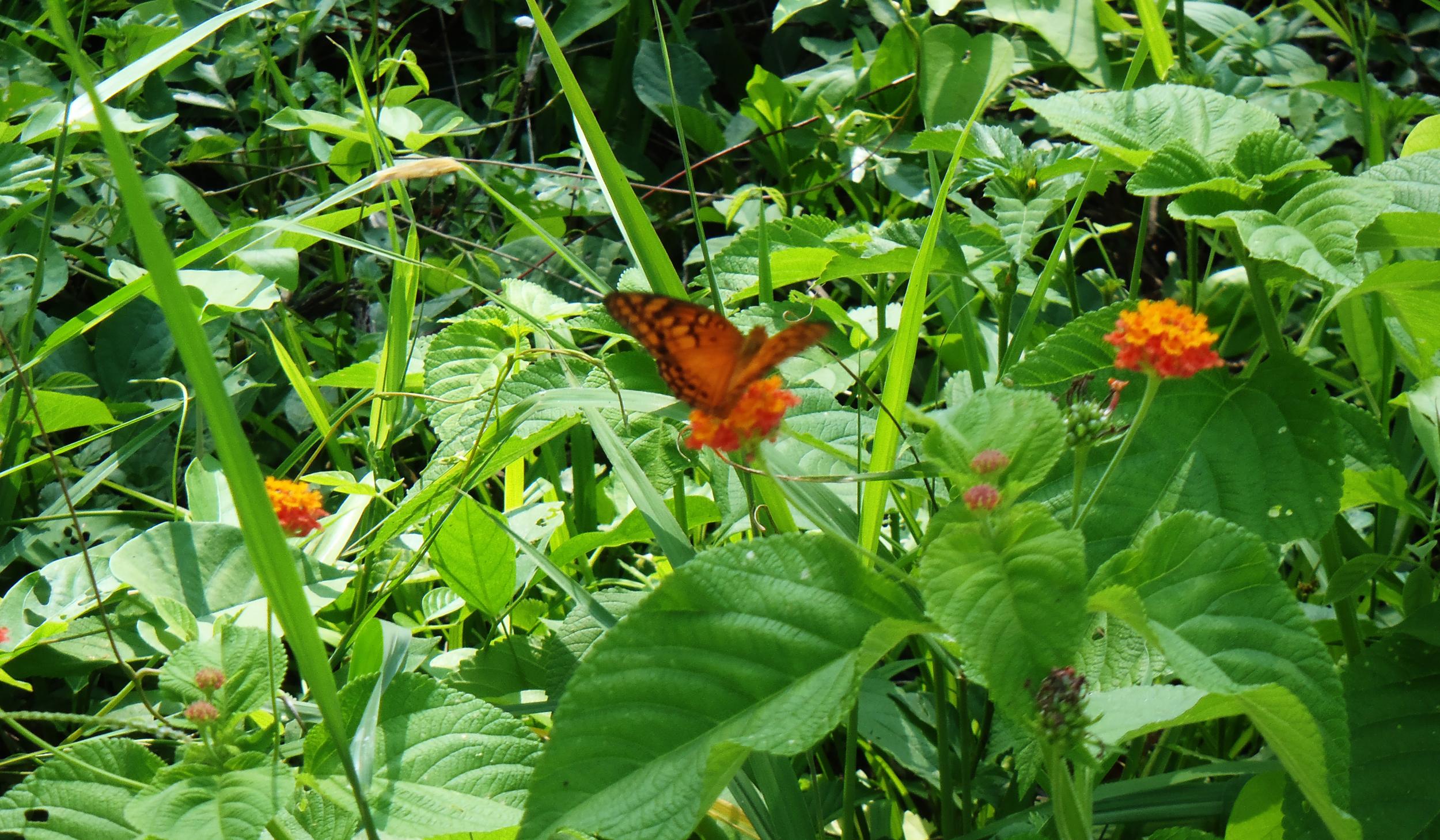 Selva tropical: tambe conoci como pulmon di mundo y pues na interes di nos tur pa proteha