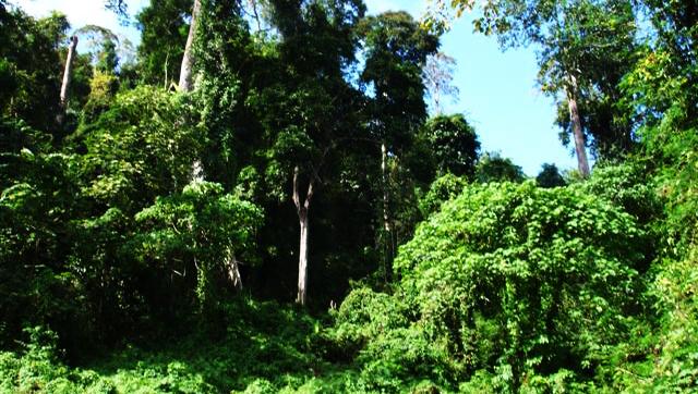 Selva tropical ta sumamente importante  pa e 'reciclahe' di e ecosistema y purificashon di awa