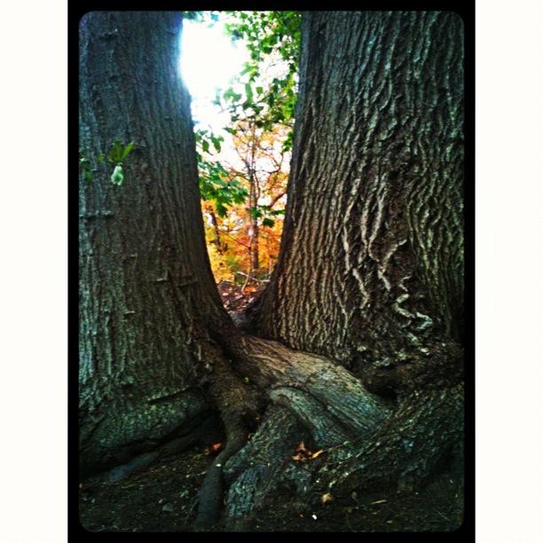 twintrees.JPG