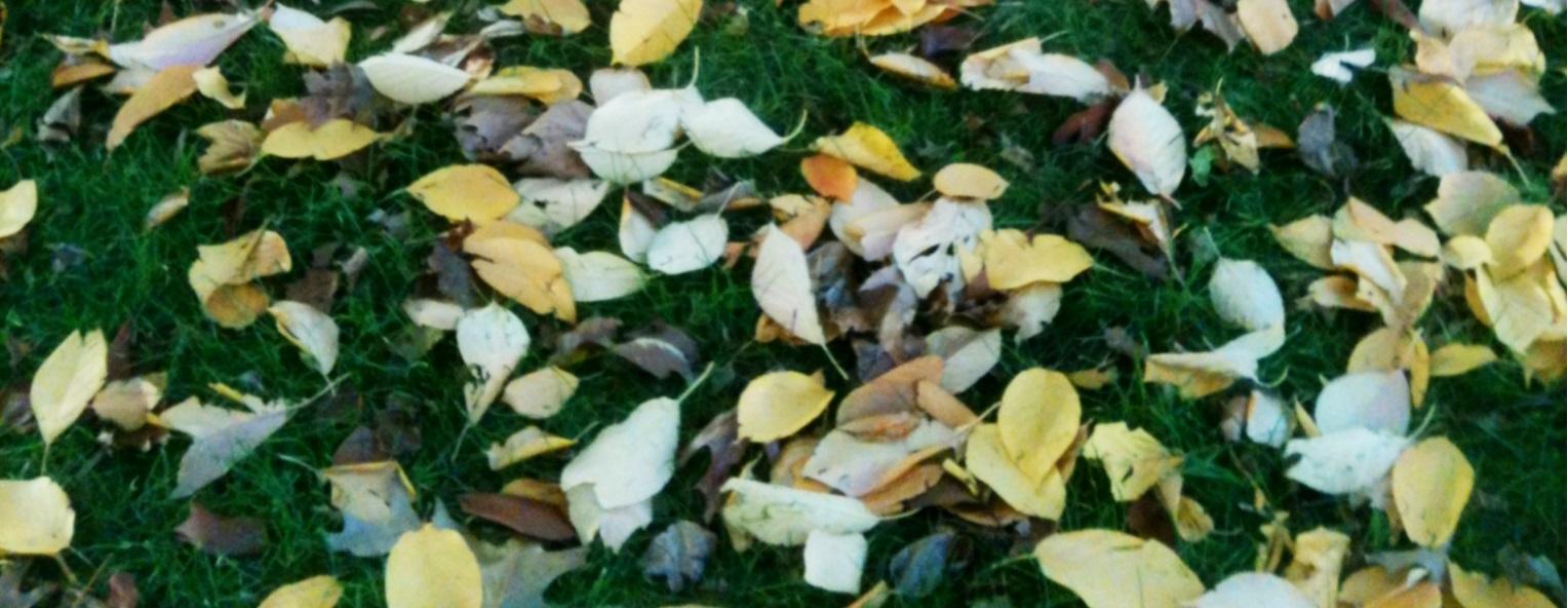 fall_cropped.jpg