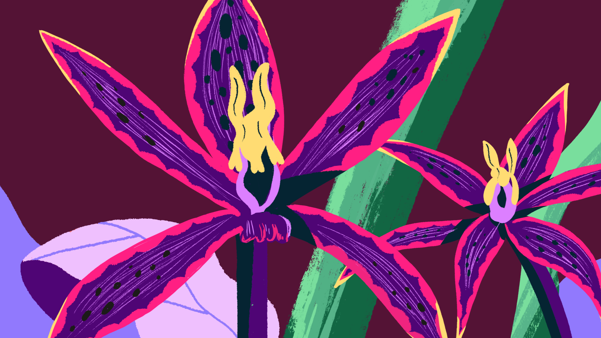 TED_orchid_edit_02377.png