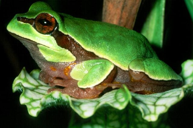 blunden-frog.jpg