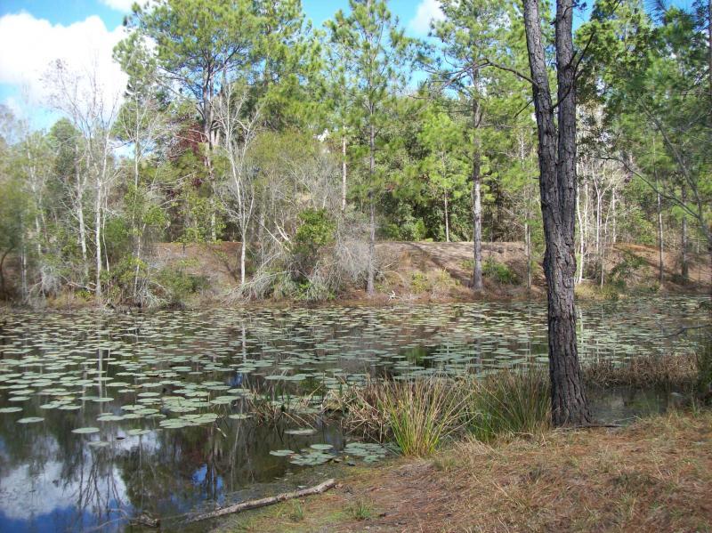 Cypress Creek1.jpg