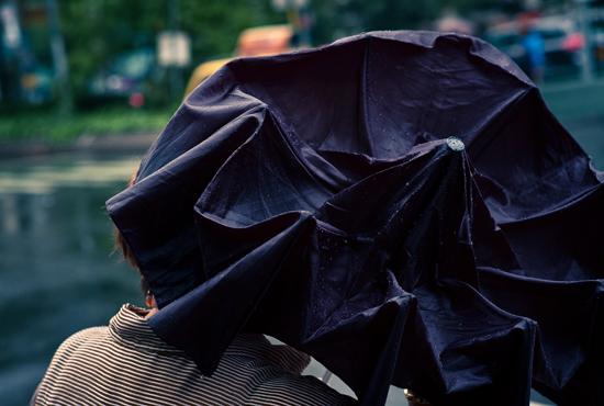 purple, manhattan