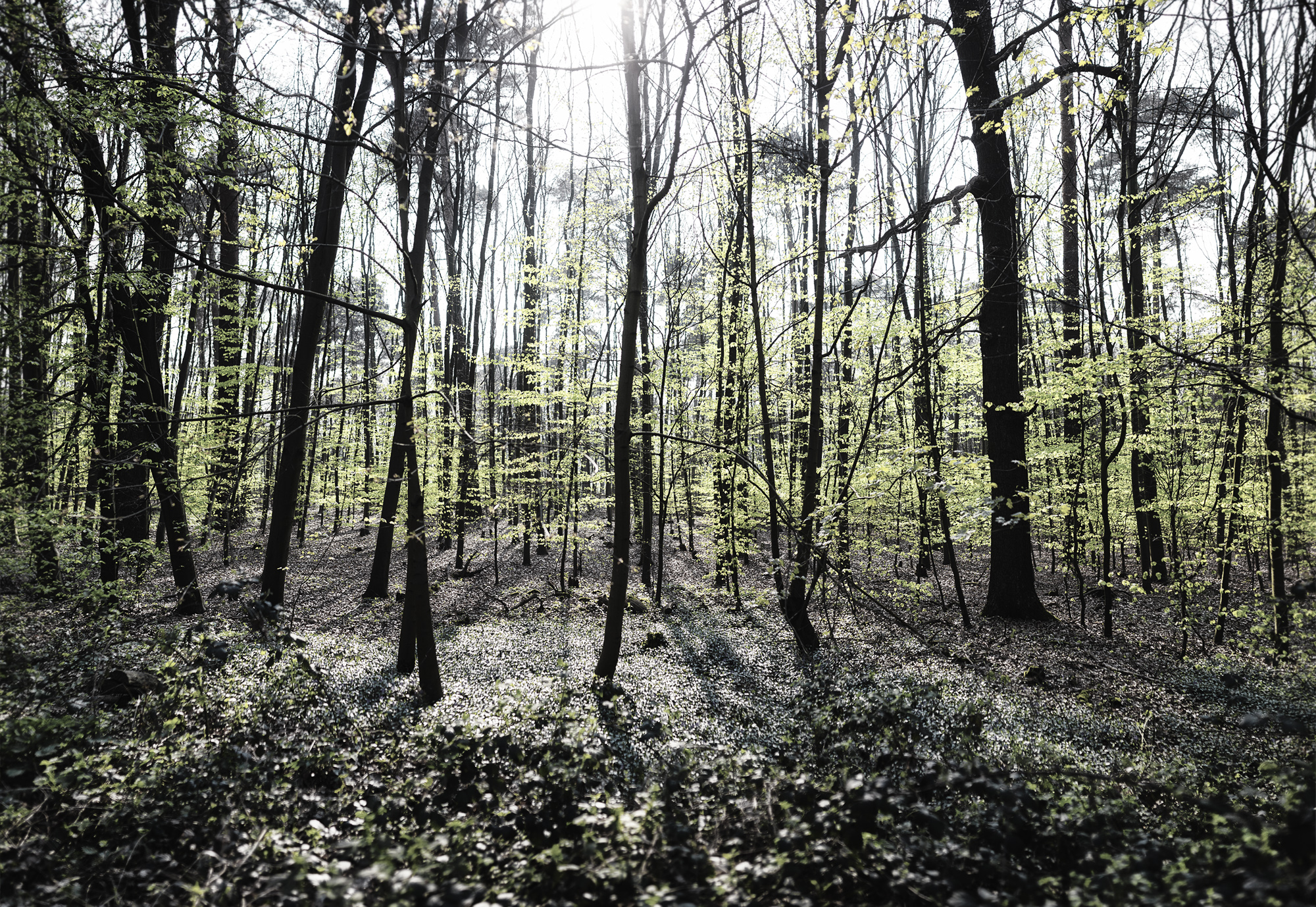 Spring_Forest_Panorama1.jpg