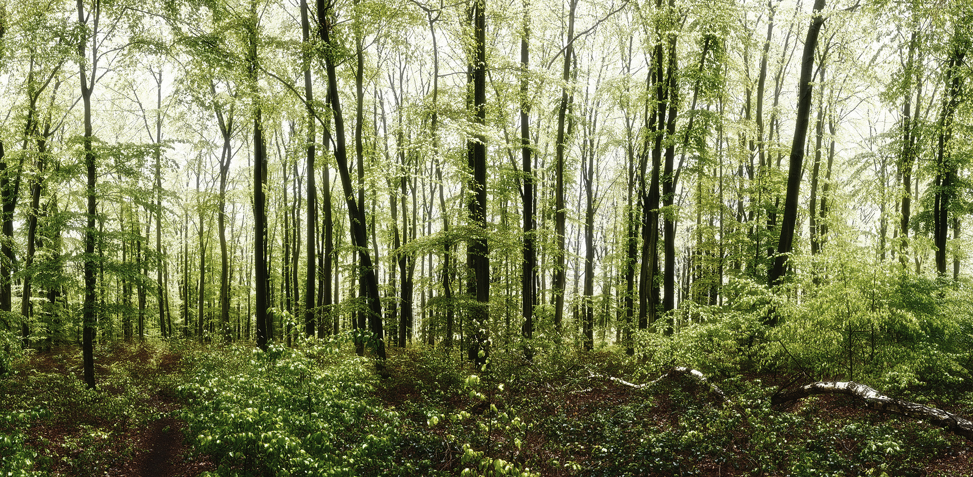 Wald Panorama - fine art