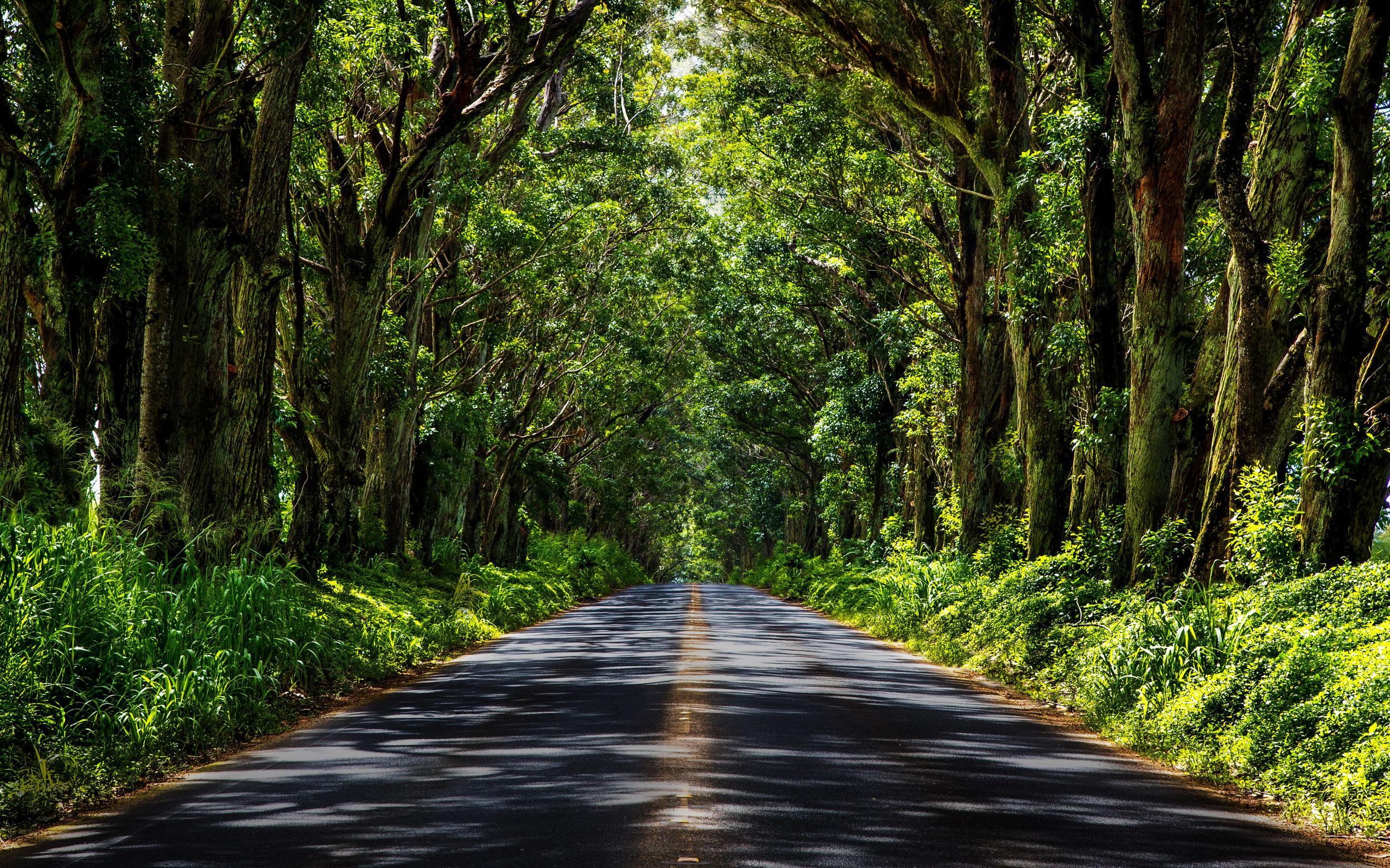 Tree Tunnel Road – Kauai