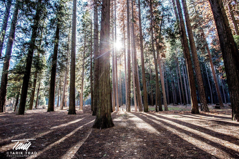 Sunlight thru Trees in Campground