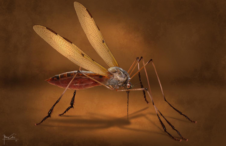 mosquito_full.jpg