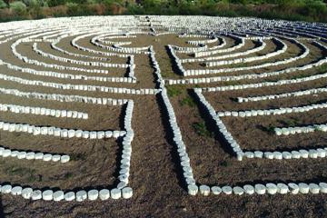 Labyrinthsmall MS.jpg