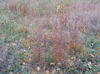 """There are prairie species suited to all land conditions, from dry and wet areas, to the middle ground called """"mesic."""""""