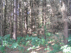 Many local residents have begun to take an interest in restoring woodlands to their properties.