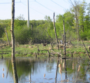 shoreline_habitat_restoration_3.jpg