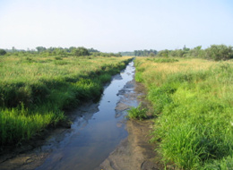 Areas adjacent to drainage features may hold enough moisture to remain jurisdictional wetland.