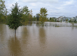 Floodwaters may obscure the wetland edge. When the water levels recede, the wetland edge can be identified.
