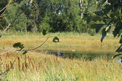Wetlands are protected under state, federal, and local laws or ordinances.