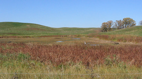 Your community (municipality, watershed district, or homeowners association) may have shoreline or buffer restrictions that regulate clearing of vegetation around wetlands.