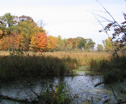If the project area is determined to include a wetland, you must fill out a project notification form for altering a wetland.