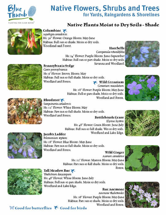 Nativeplantsshrubstrees2010.jpg