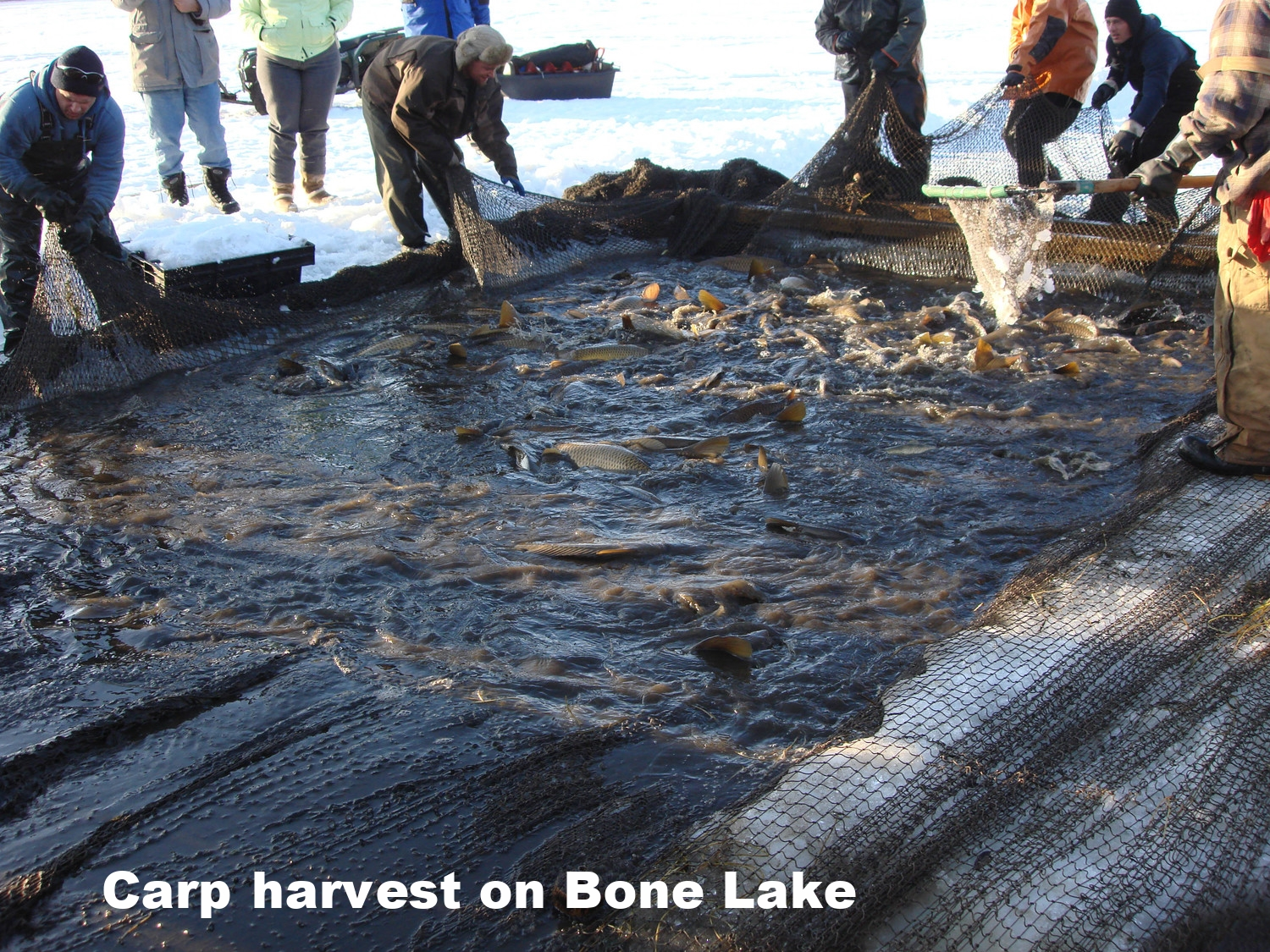 CLFLWD carp harvest in Bone Lake 2010.jpg