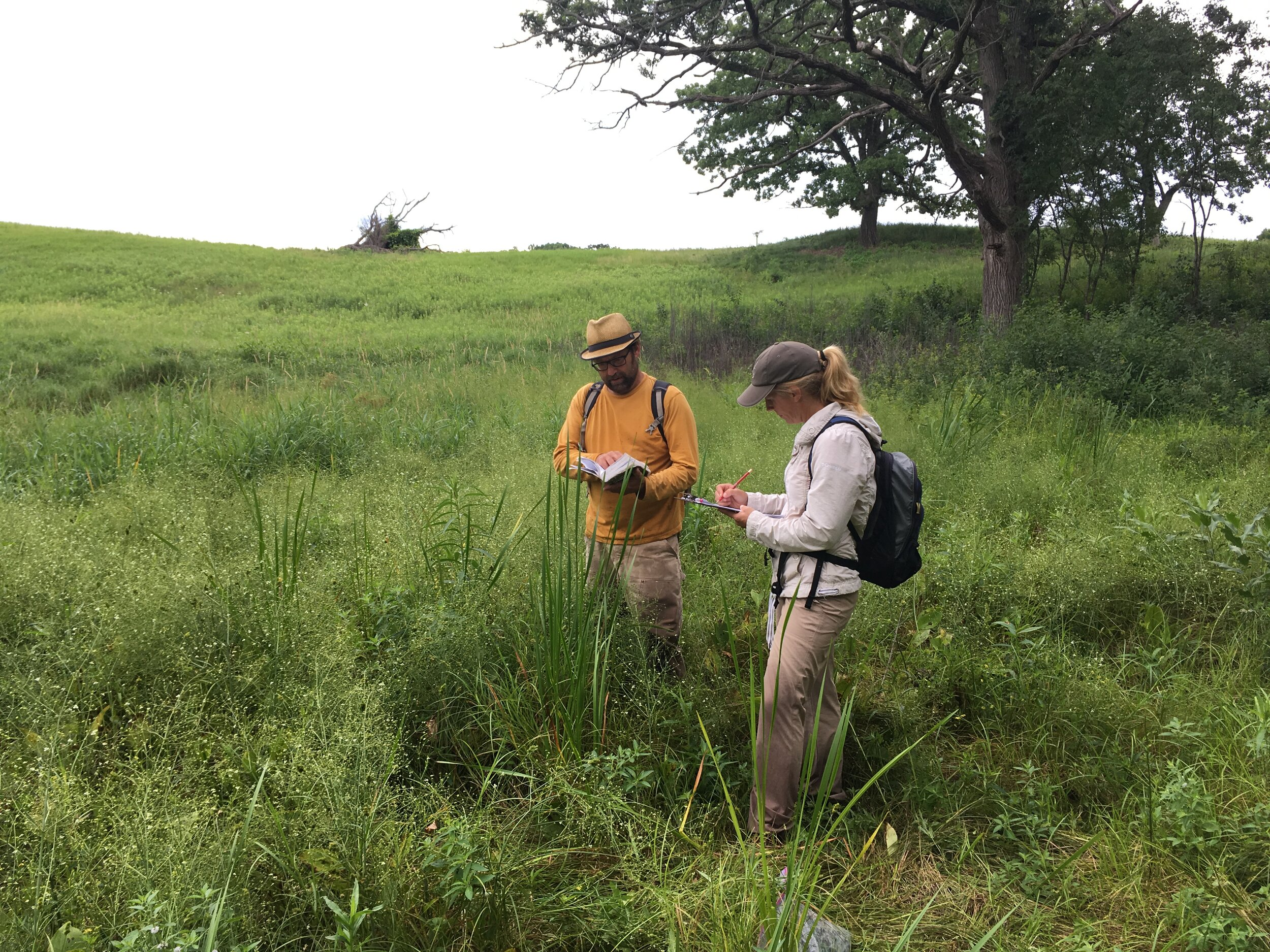 Above: Tony Randazzo (left) in the field with Tara Kelly (right) identifying a plant. Some people stop to smell the roses, whereas Tony always stops to identify a sedge. His eye for detail and love of native plants is evident in his photography as he takes a closer look at the colors and textures of our natural world.
