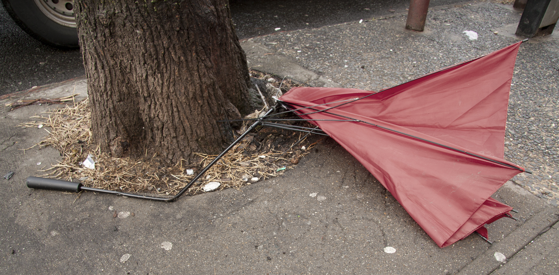 red_umbrella_tree.jpg
