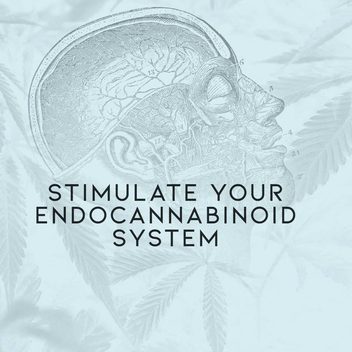endocannabinoid.jpg