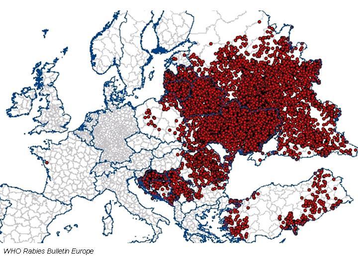 Steklina v Evropi leta 2008